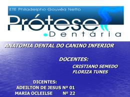 trabalho de anatomia dental canino inferior