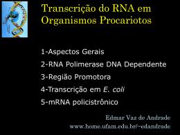 Transcrição em Organismos Procarióticos