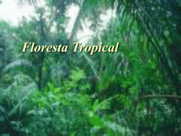 Floresta Tropical (jakson e douglas)