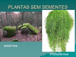 PLANTAS SEM SEMENTES