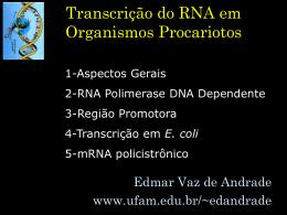 Transcrição do RNA