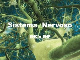Sistema_nervoso_Humano_8_ano