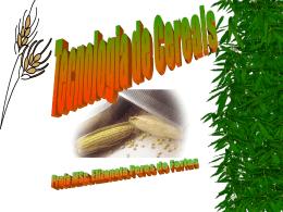 Principais Grãos Cereais