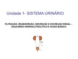 filtração, reabsorção, secreção e excreção renal