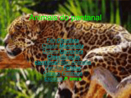 Animais do pantanal - Mateus e Elivelton