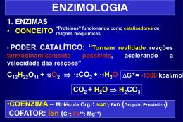 T05 - Enzimas