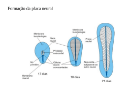 Neurulação Secundária