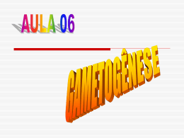 aula 06 gametogenese