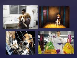 uso de animais em experiências científicas