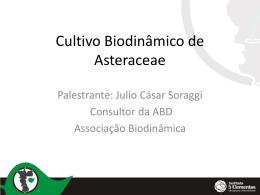 Cultivo Biodinâmico de Asteraceae – Julio Soraggi