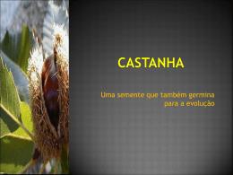 Castanha - Uma semente que também germina