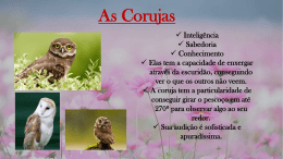 As Corujas