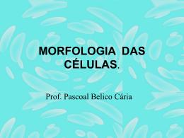 Acesse aqui - Colégio Maria Clara Machado