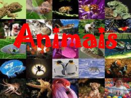 animaisvertebradoseinvertebrados-130327200420 - e