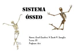 Sistema Ósseo