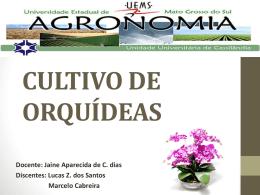 orquideas lucas zacarias e marcelo