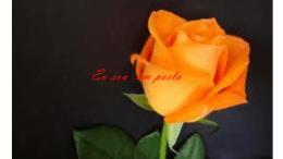 09-João Elias Borges Pessoa