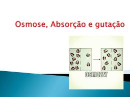 Osmose, Absorção e gutação (1979707)