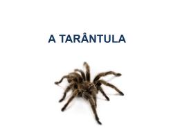 Tomás_Tarântula