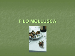 Filo Mollusca caracteristicas gerais