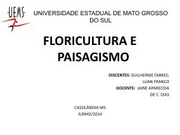 gladiolo guilherme e luan - Agronomia - Cassilândia