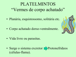 PLATELMINTOS *Vermes chatos*