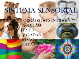 sistema sensorial completo
