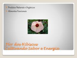 Apresentação Linha Produtos Flor dos Hibiscus