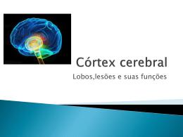 Cortex cerebral.