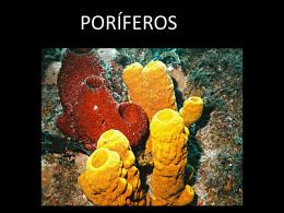 poriferos - Curso e Colégio Acesso