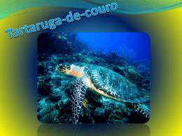 Tartaruga-de