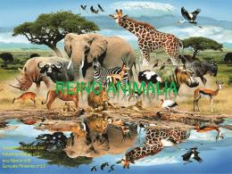 reino Animalia, Reino Animal