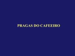 PRAGAS DO CAFEEIRO-29-09 (2819703)