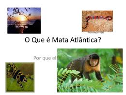 O Que é Mata Atlântica