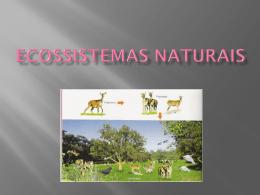 Slides Introdução aos Ecossistemas