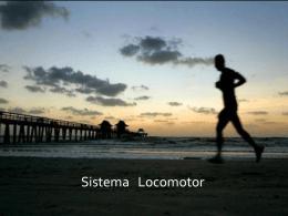 Sistema Locomotor - Portal do aluno RUMO