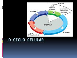 O ciclo celular