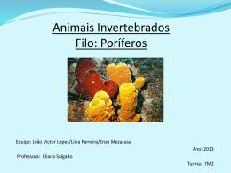 Animais Invertebrados Filo: Poríferos
