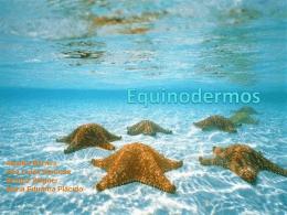 Equinodermos - Portal Educacional