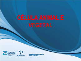 estruturas da célula animal e vegetal