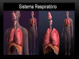 Aparelho respiratório