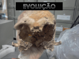 Evolução - Portal do aluno RUMO