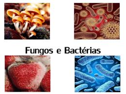 fungos e bactérias.