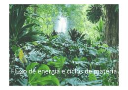 Fluxo de energia e ciclos de matéria