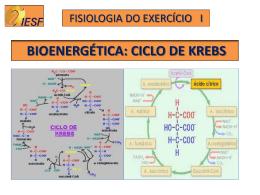 BIOENERGÉTICA: CICLO DE KREBS