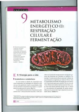 Apostila Bioenergética (Nutrição)