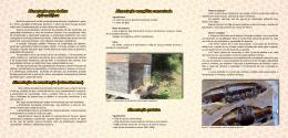 Alimentação para abelhas Apis mellifera Alimentação de