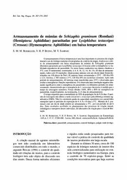 Armazenamento de múmias de Schizaphis graminum (Rondani