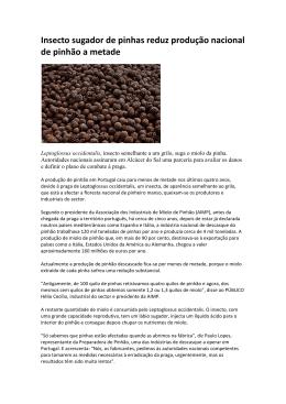 Insecto sugador de pinhas reduz produção