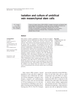 Isolation and culture of umbilical vein mesenchymal stem cells
